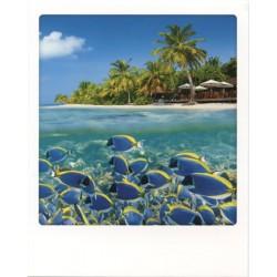 Poissons Maldives