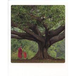 Moines sous arbre